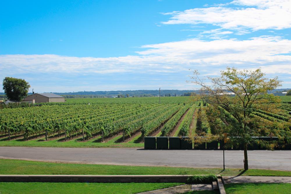 trius vineyards
