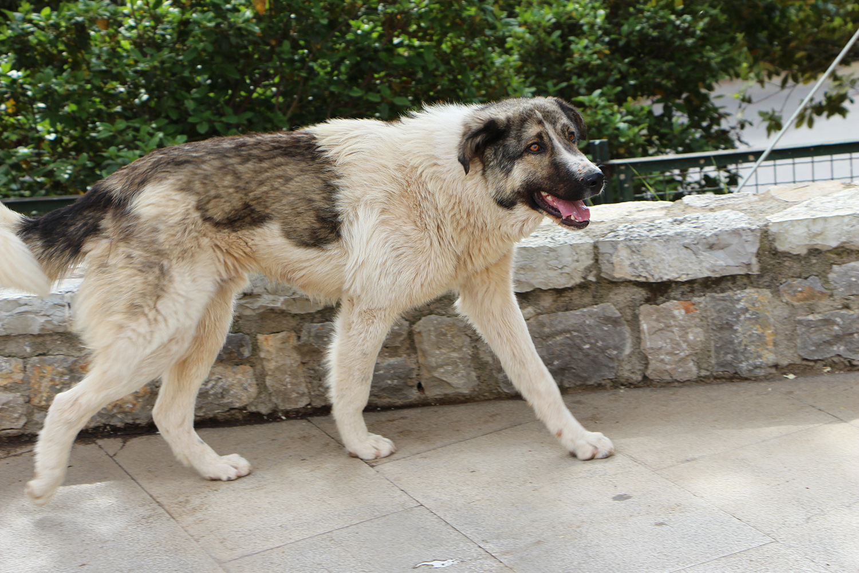 delphi greece cute stray dog