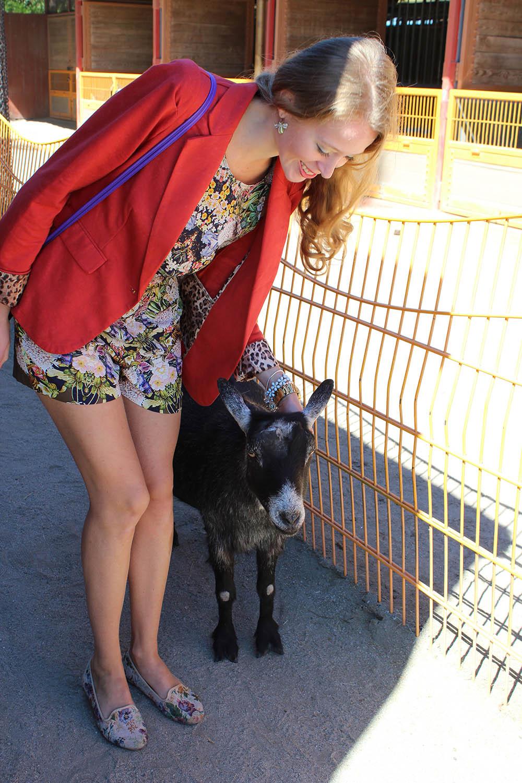 disneyworld animal kingdom goat