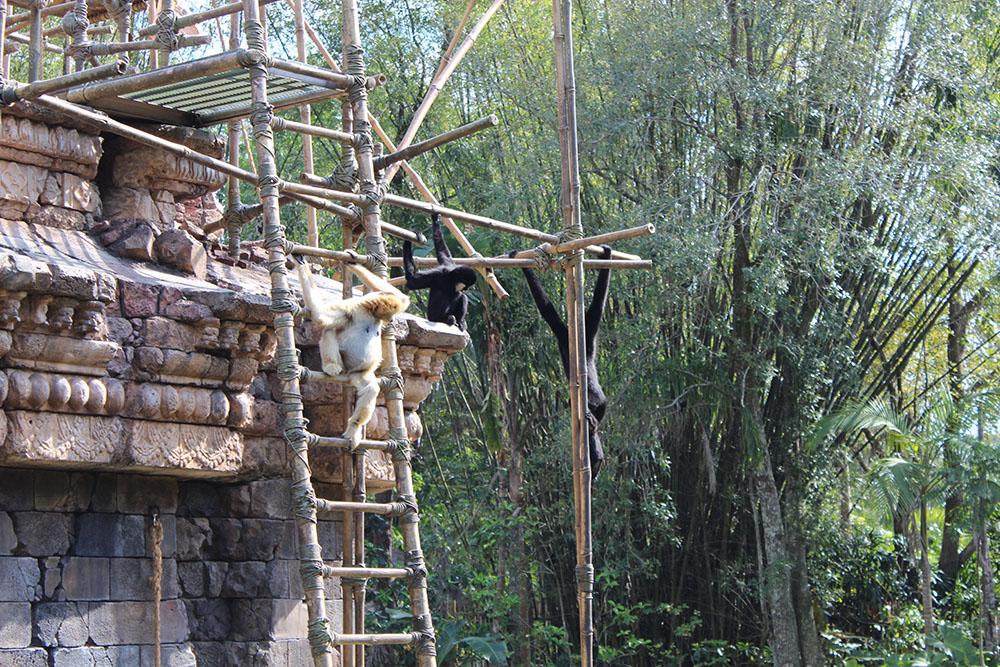 disneyworld animal kingdom monkeys