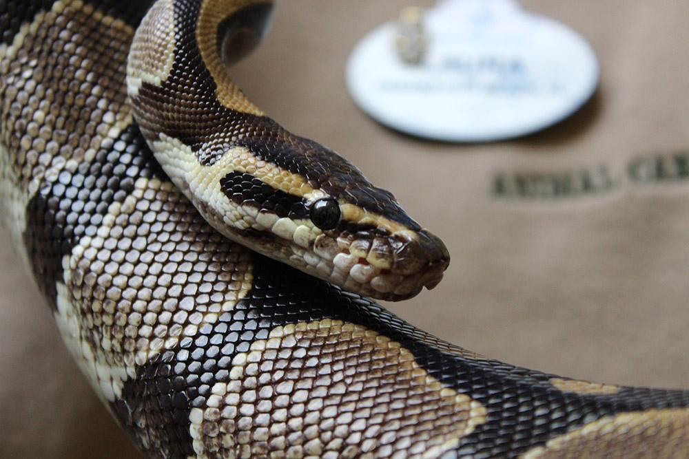 disneyworld animal kingdom snake