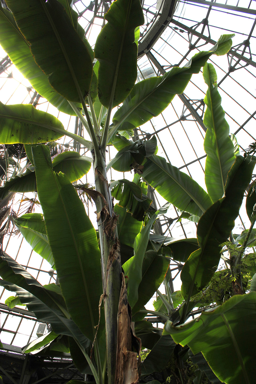 palm room allan gardens