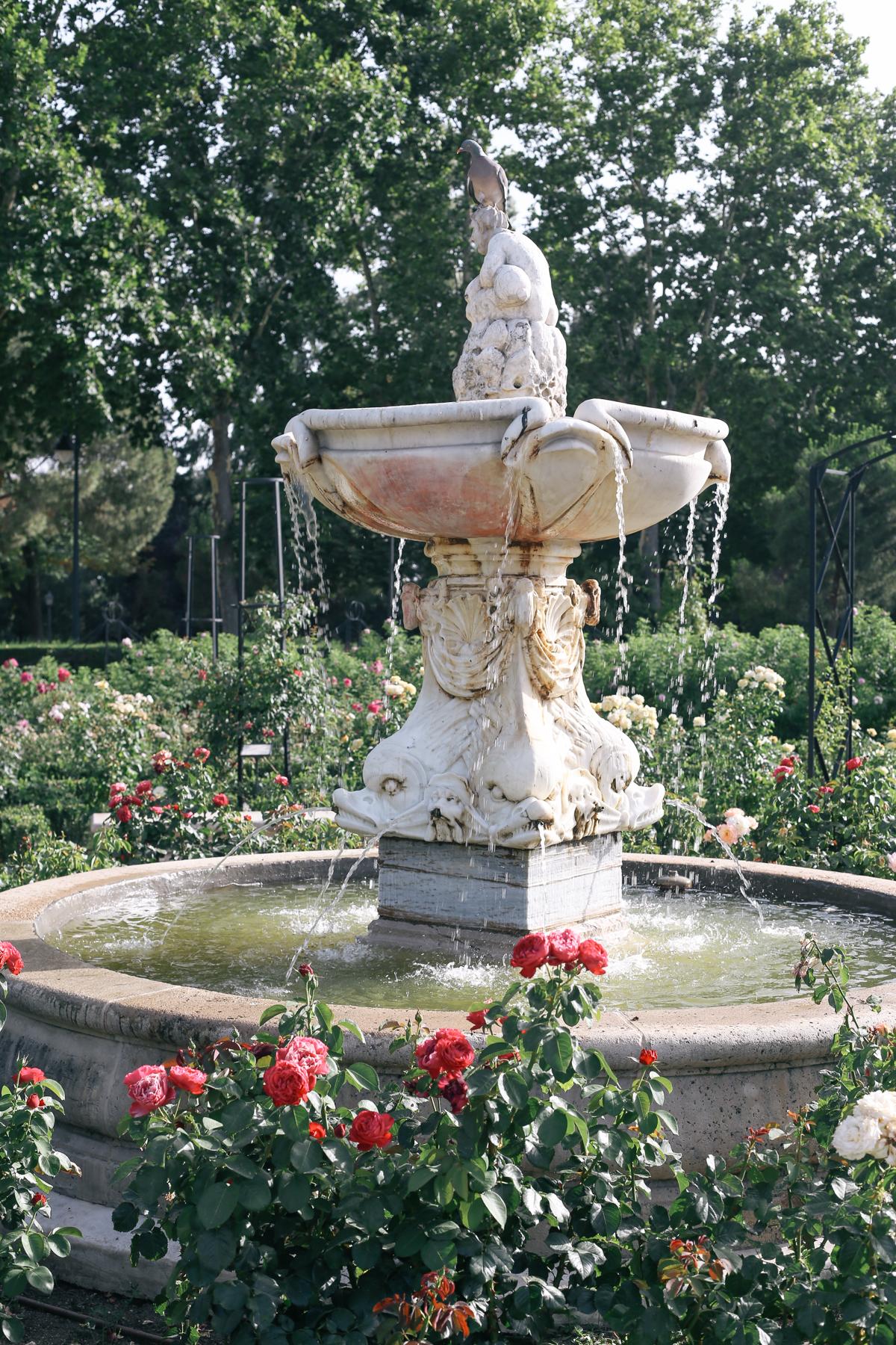 roselada madrid retiro park (2 of 5)