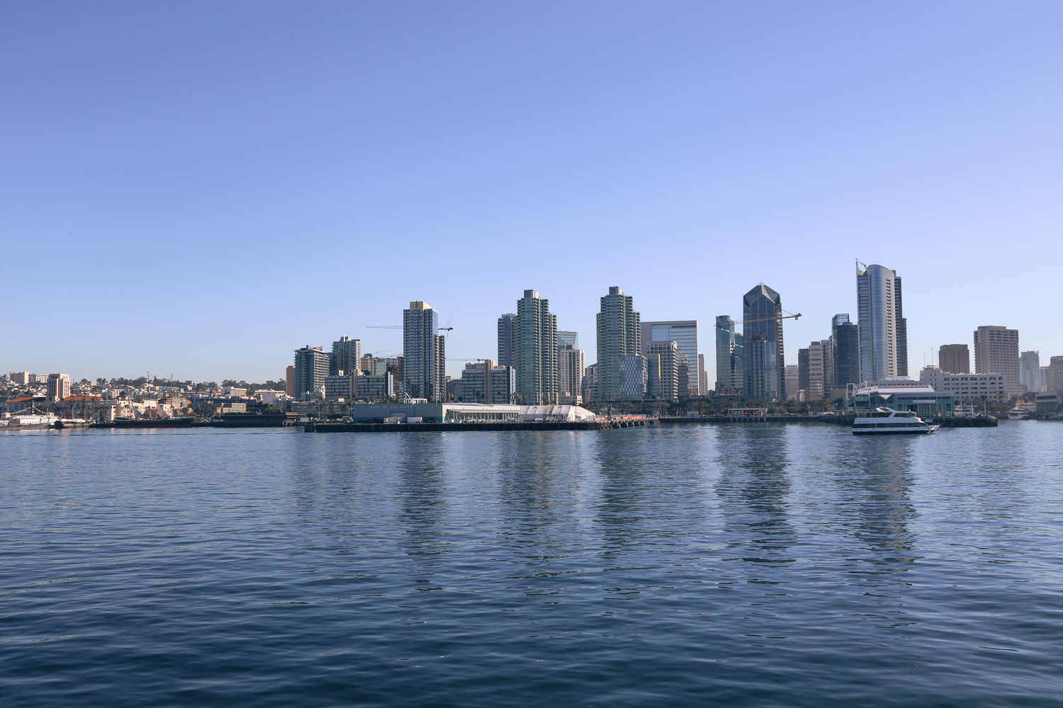 san diego hornblower cruises whale watching (2 of 14)