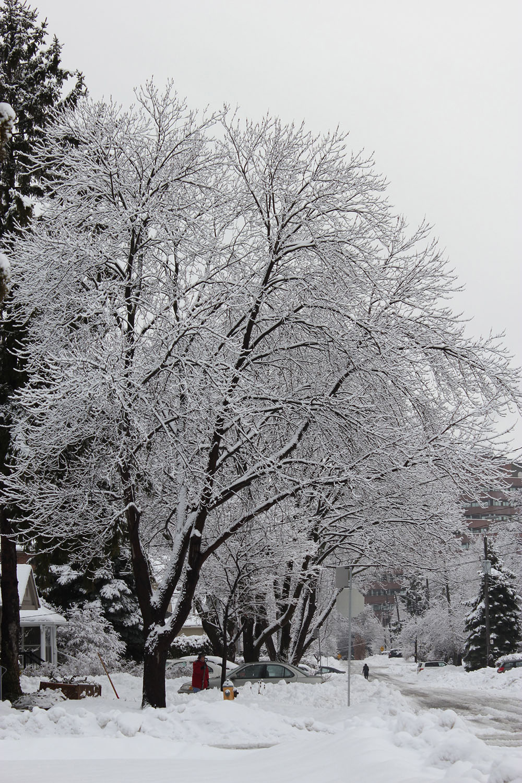 winter in toronto